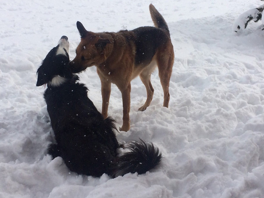 teamtraining mensch und hund